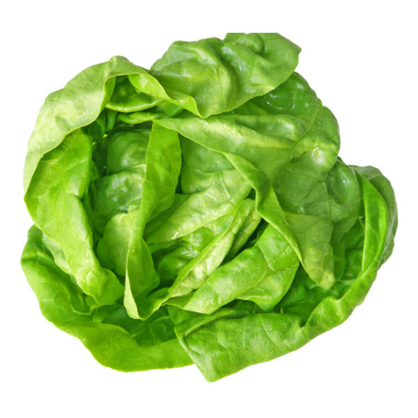 butter and cos lettuce mix